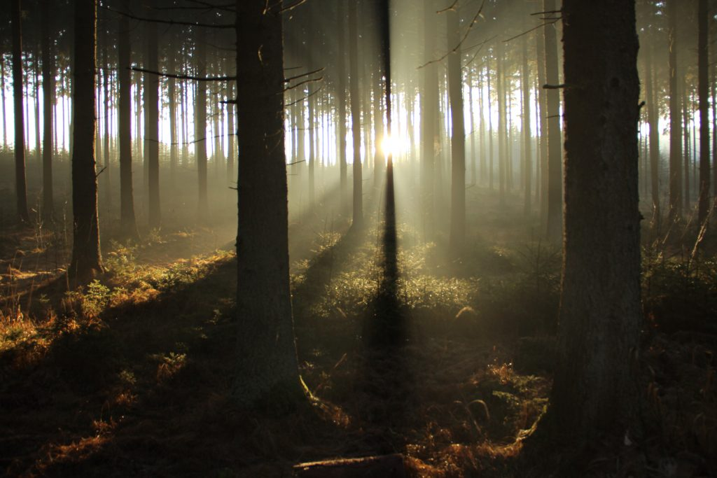 very nice view of light through the trees in the morning